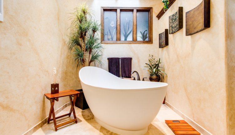 plante-baie